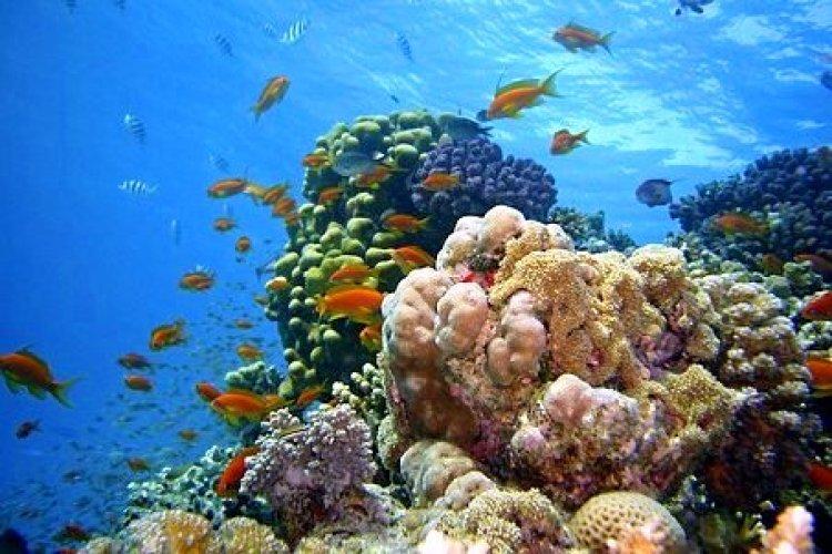 Rainbow Reef Fiji