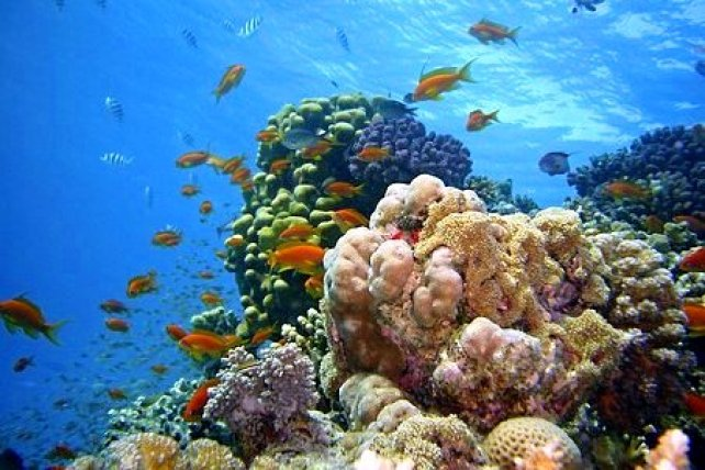 Rainbow Reef Fidschi