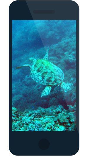Turtle Sighting