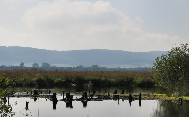 Moorsee bei Lübbecke