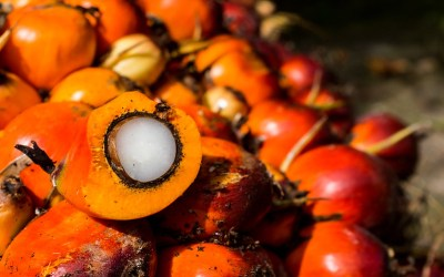 The Secret Ingredient In Almost EVERYTHING You Use – Palm Oil!