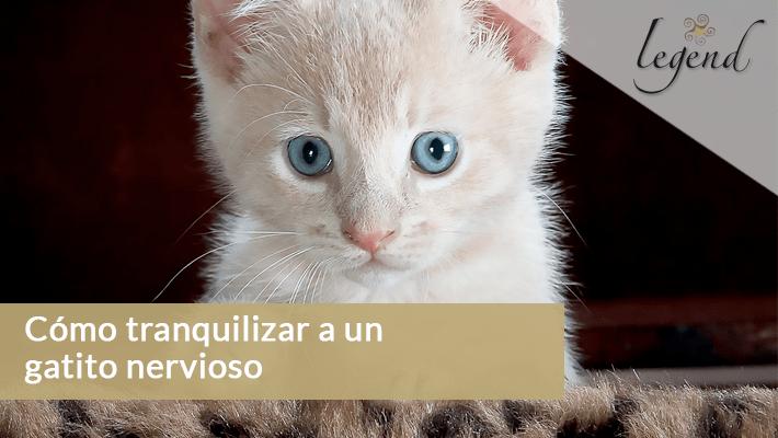 Cómo tranquilizar a un gatito nervioso