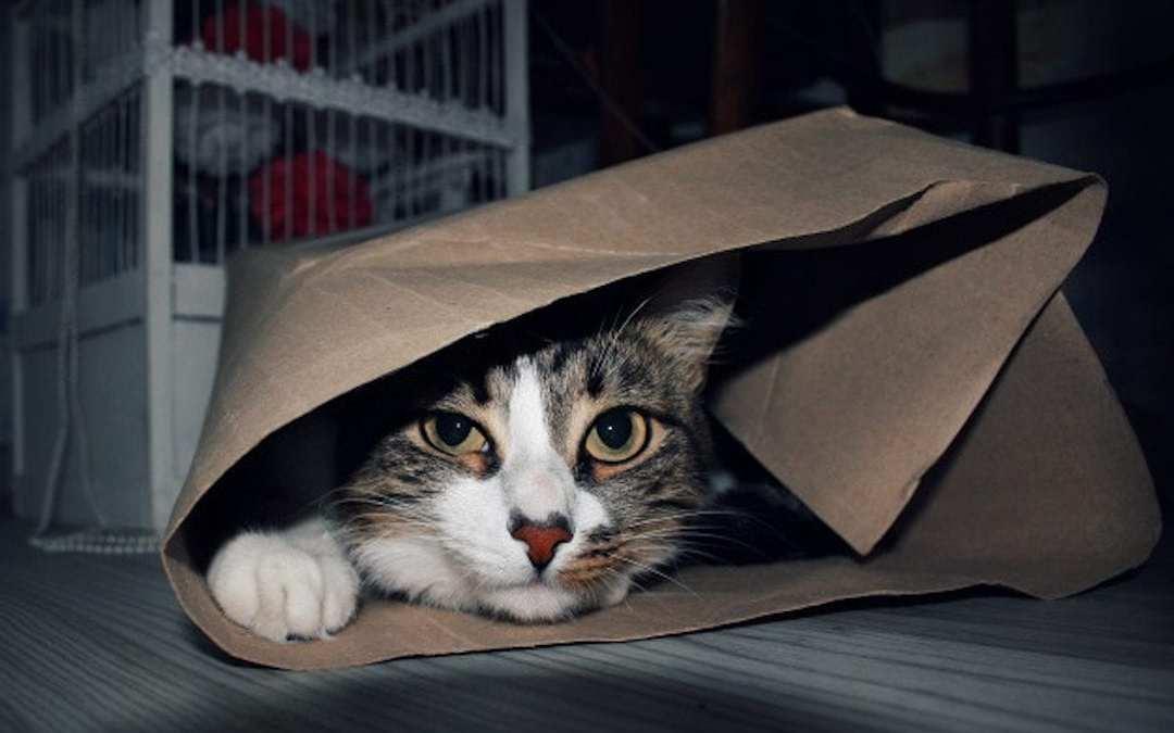 Gato enscondido par ir al veterianario