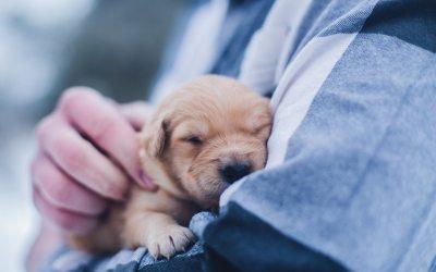 Conocer las etapas de crecimiento de tu perro, clave para que crezca sano