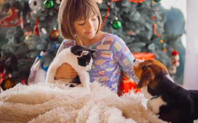 Best Christmas presents for your pet!
