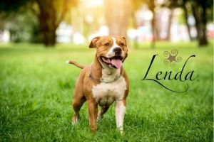 ¡La ley de perros potencialmente peligrosos va a cambiar!