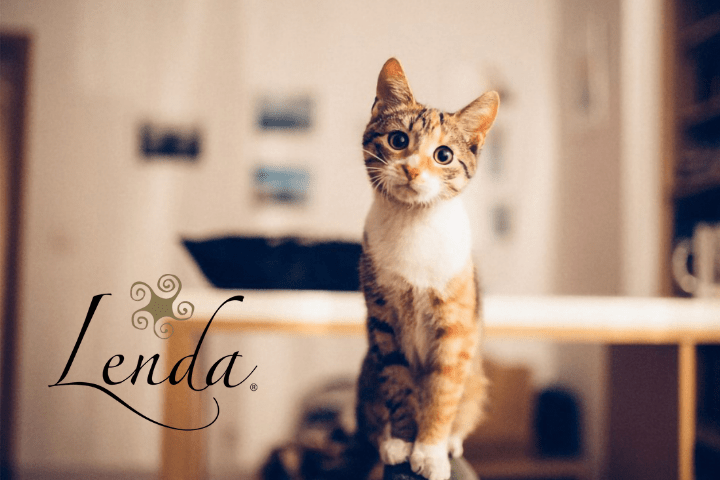 Find out why your cat throws things on the floor