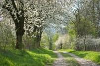 Springroad