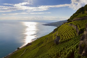 http://www.dreamstime.com/royalty-free-stock-photo-leman-lake-terrace-vineyard-lavaux-region-switzerland-image34409895