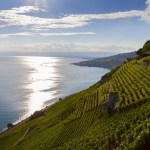 A bit of Fribourg in Vaud – The Domaine des Faverges