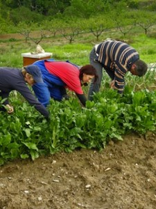 farm workers swiss 4000 minimum wage
