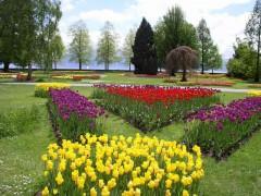 Tulip Festival - ©Morges Region Tourisme