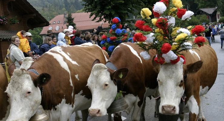 Flower-covered cows take to Swiss streets – Switzerland's désalpe (alpabzug) explained