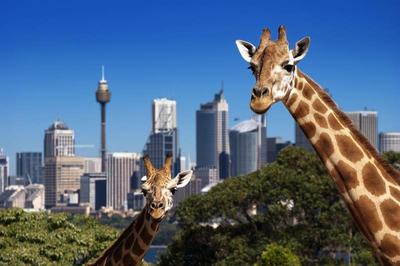 Sydney, Australia in popular with Swiss expatriates - © Ralph Lohse | Dreamstime.com