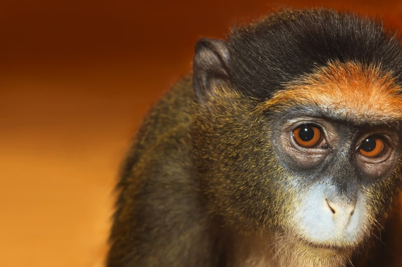 What will the monkey do next? © Marigo20 | Dreamstime.com