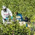 Swiss to vote on synthetic pesticide ban