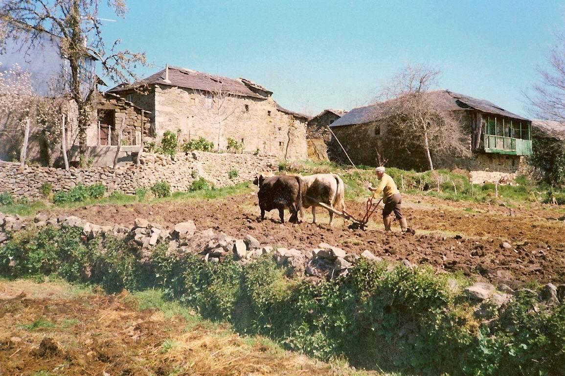 El lino la patata y otros productos de regado de las cortinas y los huertos sanabreses Sanabria Gua cultural  Lenguajesculturaless Blog