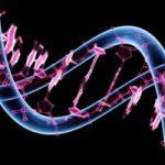 genoma