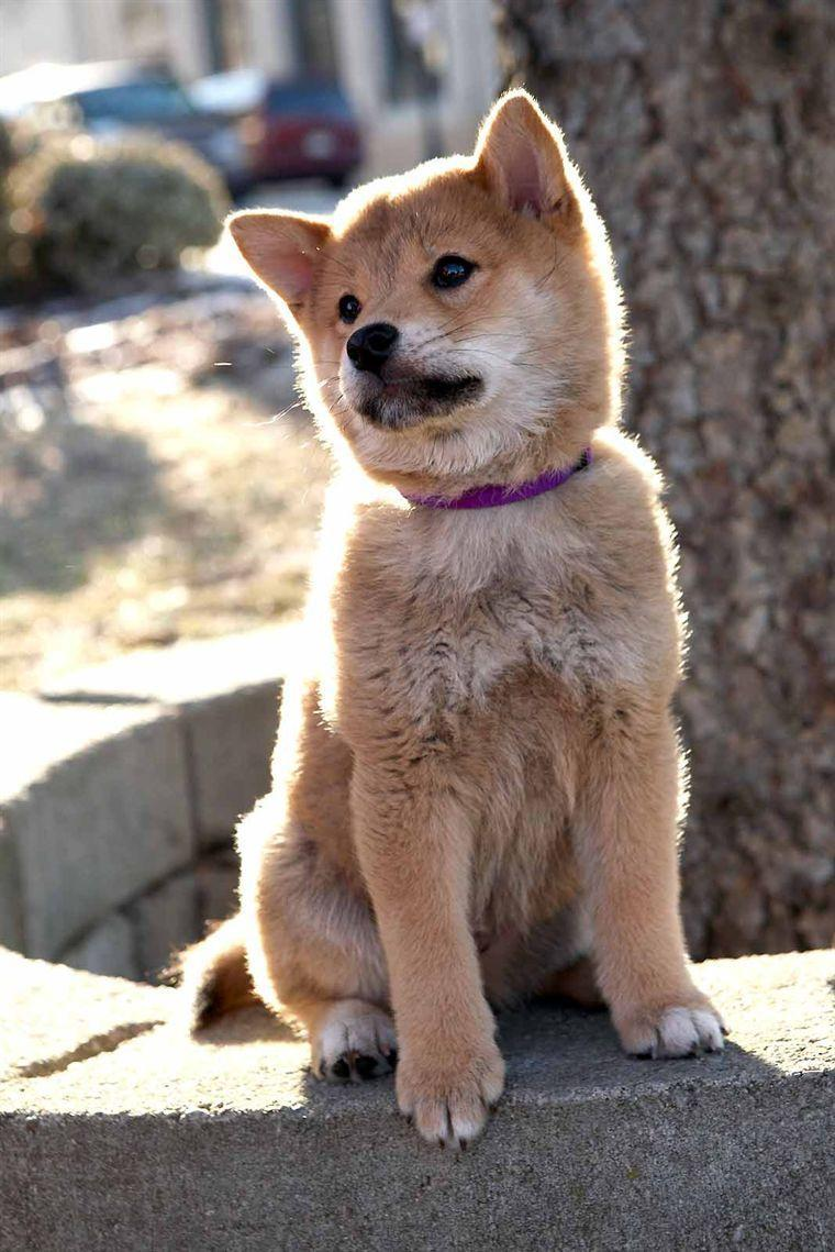 What Type Of Dog Is Hachi : hachi, Hachi, Dog's, Movie, Review, (Hachiko:, Story)