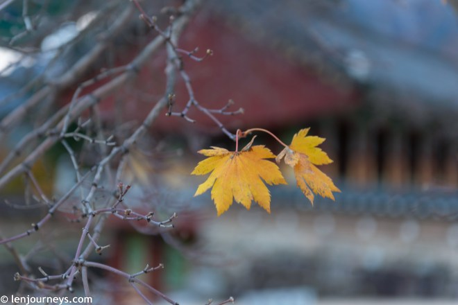The last autumnal leaves in Sinheungsa Temple