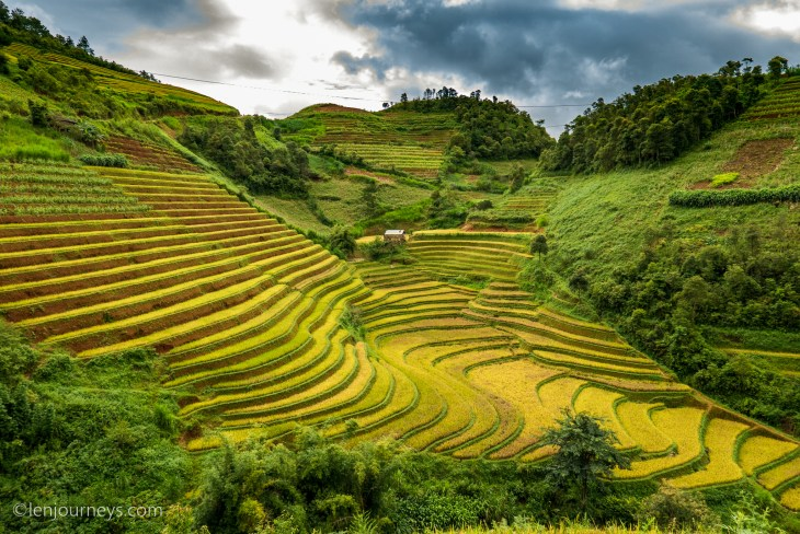 The golden stairway, Mu Cang Chai