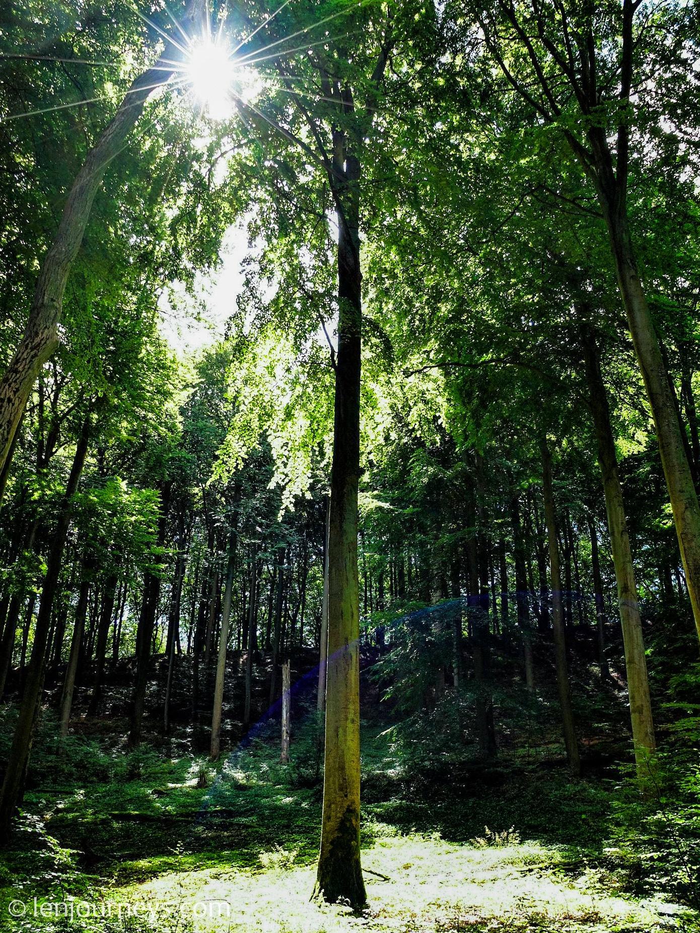 Forest bathing in Rügen