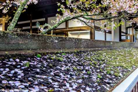 Scattered sakura petals in koyasan
