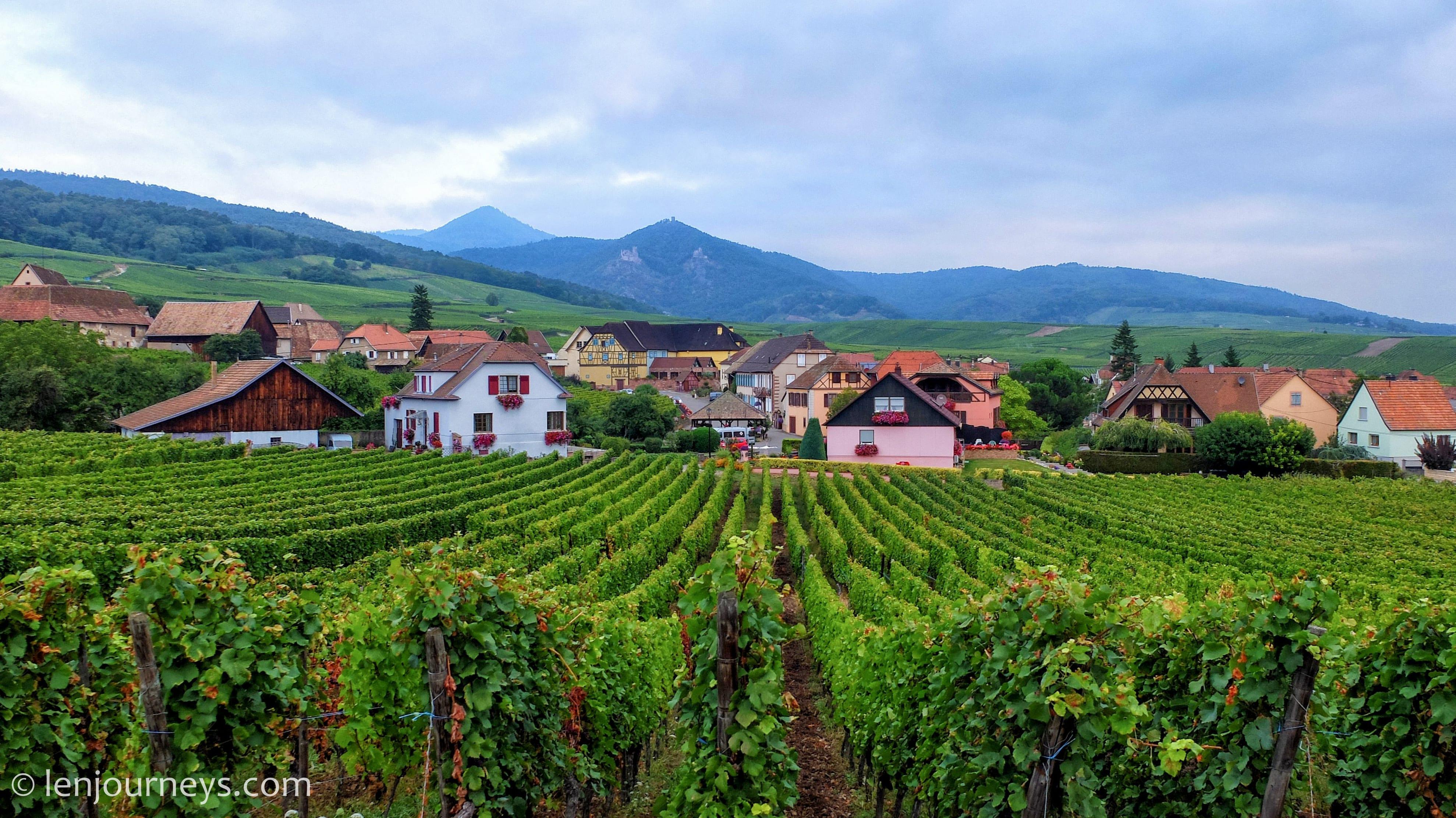 Vineyards in Hunawihr