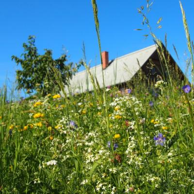 Chalupářská louka - směs semen lučních květin a trav