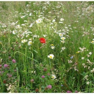 Trvalky pro včely - směs semen