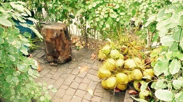kokosový orech