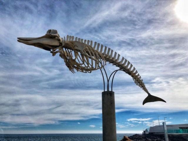 kostra veľryby v Grand Tarajal, Fuerteventura, Kanárske ostrovy, Španielsko