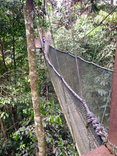 Národný Park Kinabalu, Borneo, Malajzia