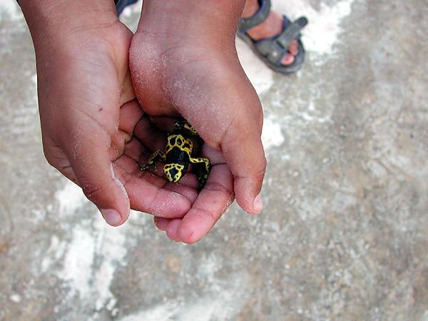 steven-con-sapito-minero
