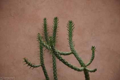 cactus / ouirgane, morocco