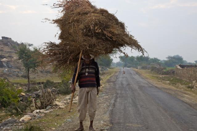 the hay gatherer / dhoondhi, india