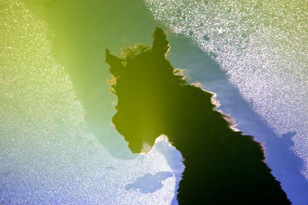 equine reflection / nacimiento, ca