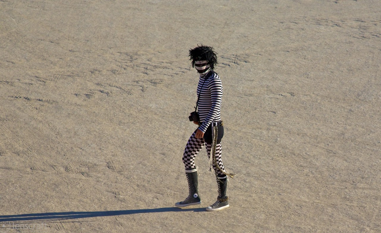 zebra / black rock city, nevada
