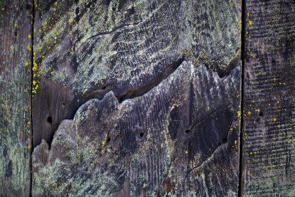the landscape / sonoma, california