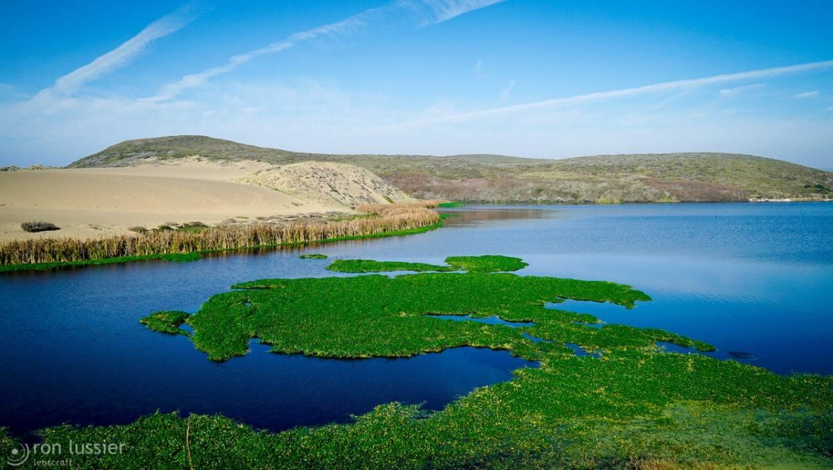 abbott's lagoon / point reyes, california