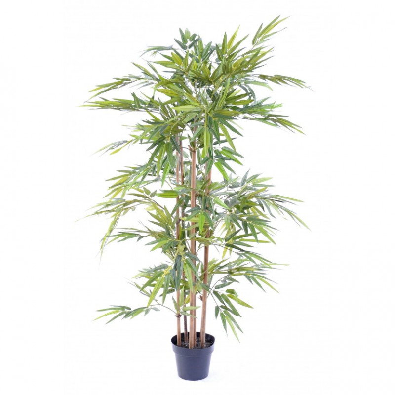 bambou pot 190cm decoration nature printemps
