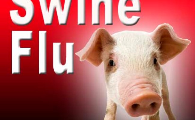 Swine Flu What To Do Citizens For Health
