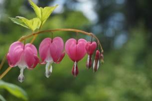 garden-conservancy-020