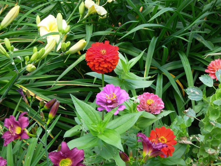 zinnias-july-garden-022