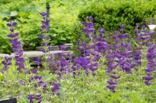 Brooklyn Botanic Gardens (35)