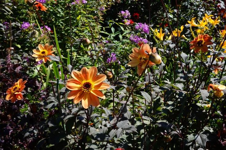 September Garden 035