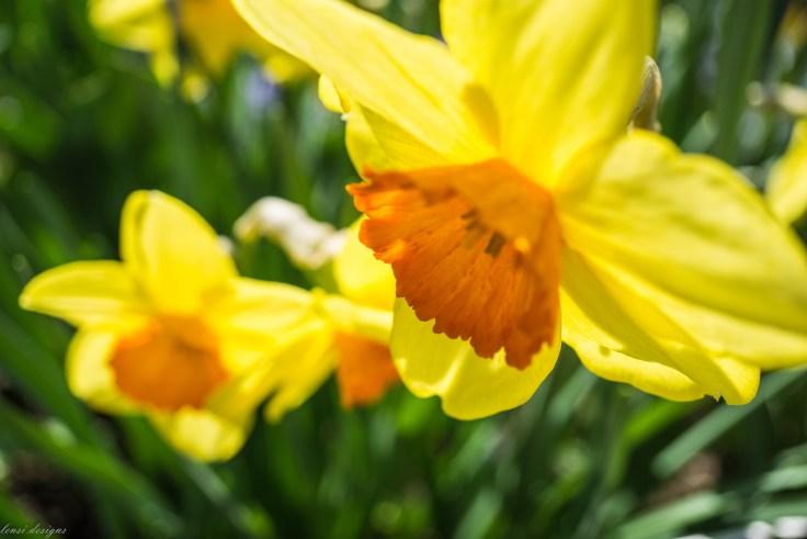 Spring Fling-18
