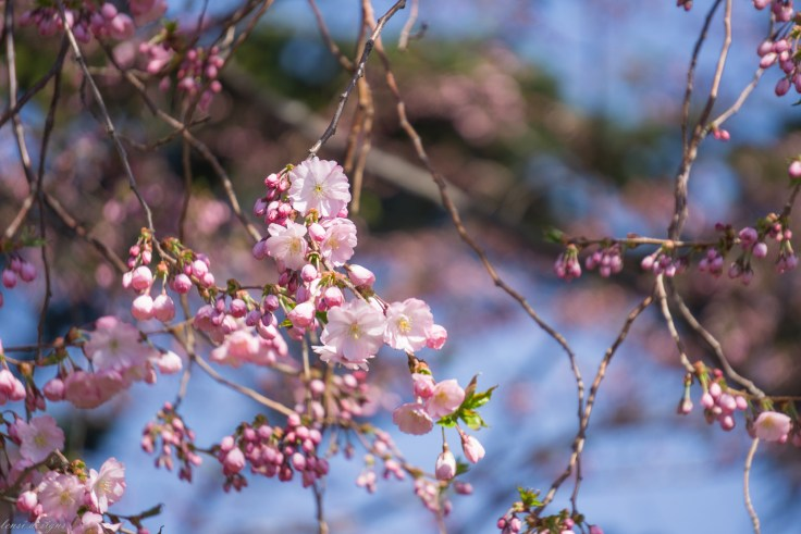 spring-fling-4