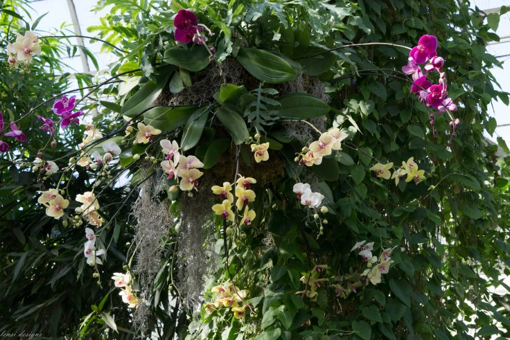 orchid-chandelier_16512227370_o