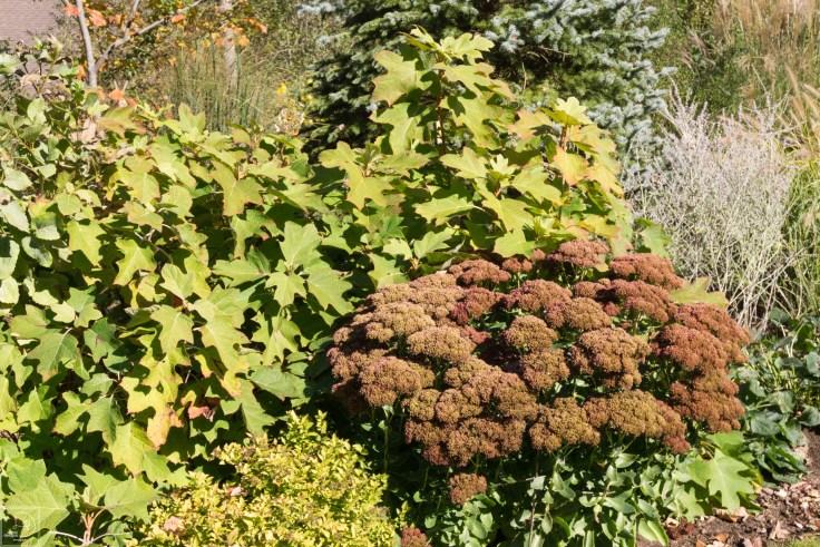 Fall blog-12